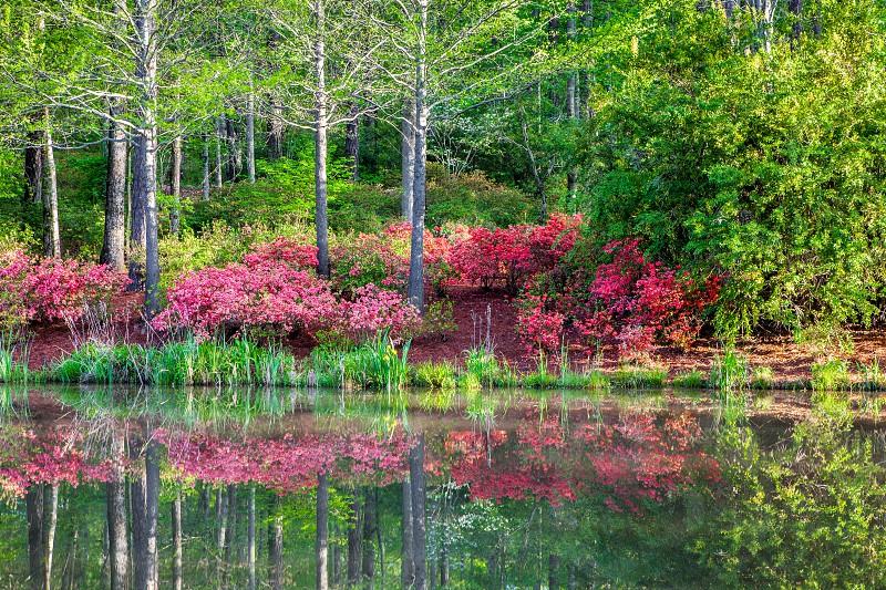 inspiring reflective meditative spring new growth photo