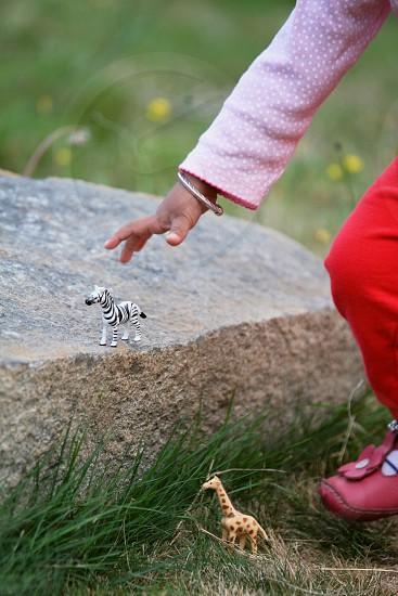 Child playing with zoo animal miniature figures zebra giraffe girl toddler photo