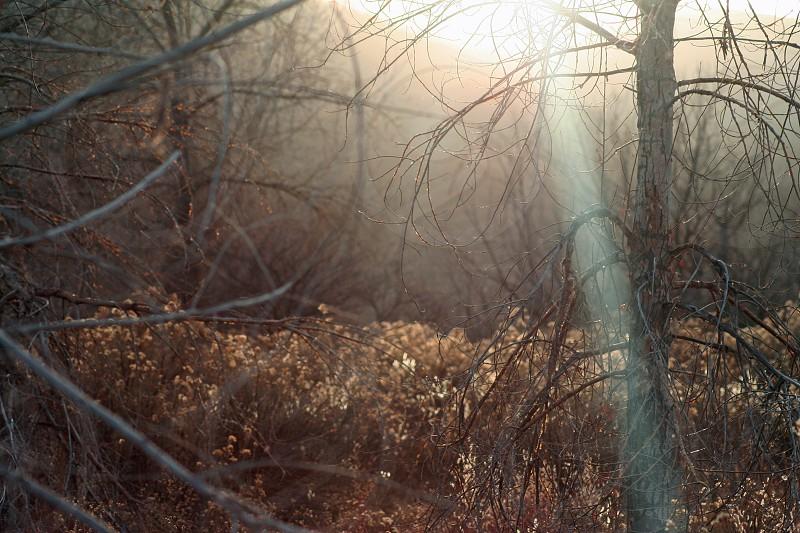 Sun glare through the woods  photo