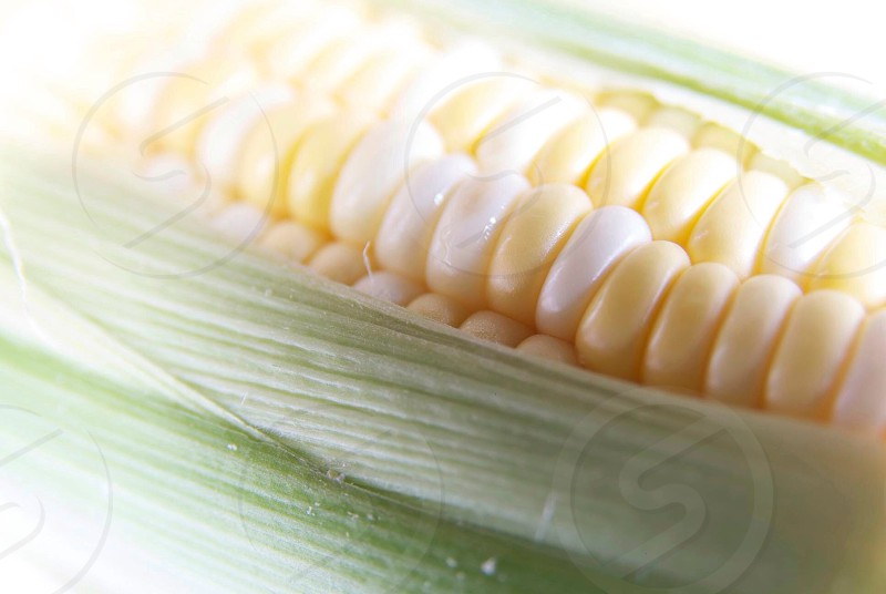 Close up of corn photo