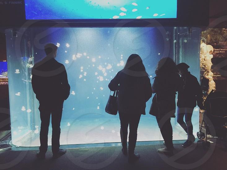 Aquarium Canada jellyfish nature animals  photo