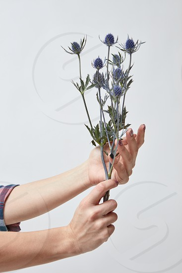 woman holding a bouquet of fresh flowers eringium on a gray background. Mother's Day photo