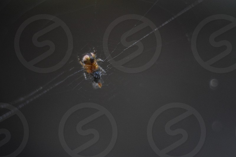 The rear end of a tiny spider in Mexico. photo