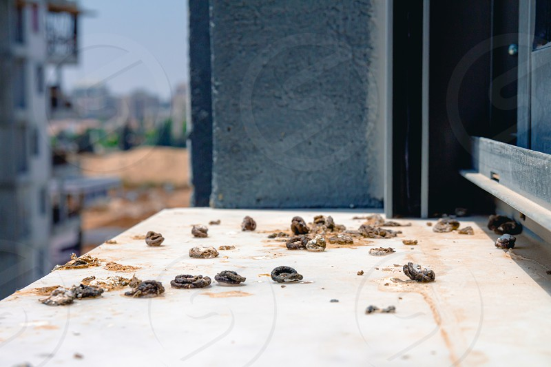 Pigeon droppings on the windowsill. A building under construction in the background. Side view. photo