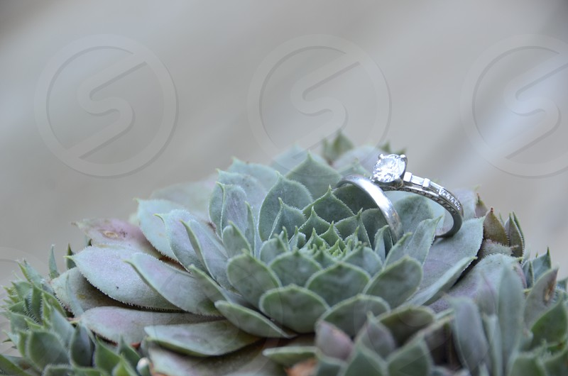 diamond solitaire ring and silver band resting on green plant photo