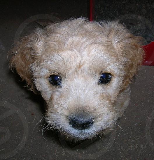 Cucky! My pet  photo
