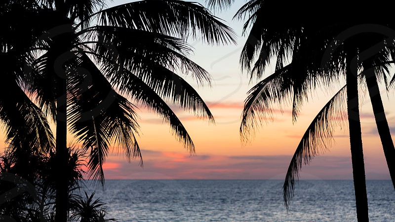 Silhouettes of tropical palms on the beach at sunset. Beautyful multicolor sky and sea view - picturesque seascape photo