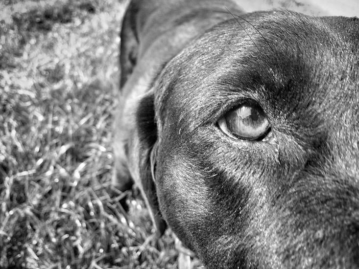 black short coat dog on green grass photo