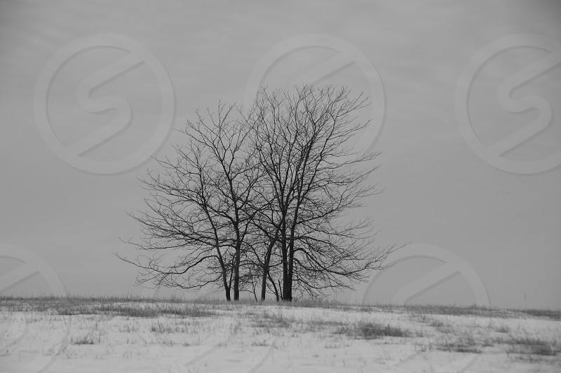 Winter field Missouri photo