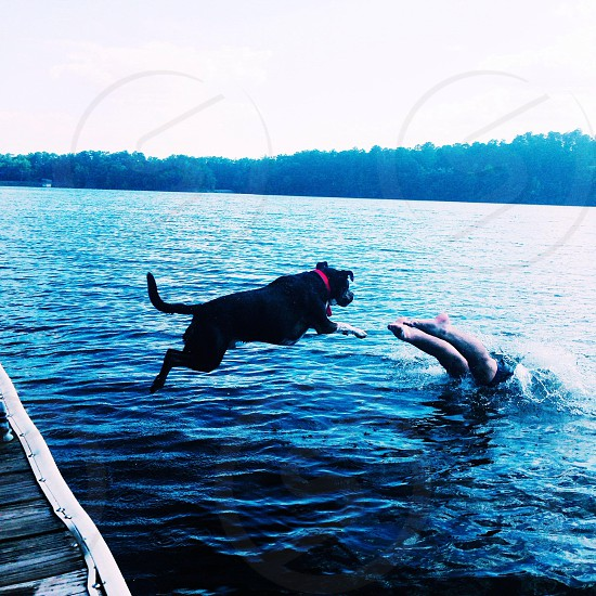 person swimming together with dog photo