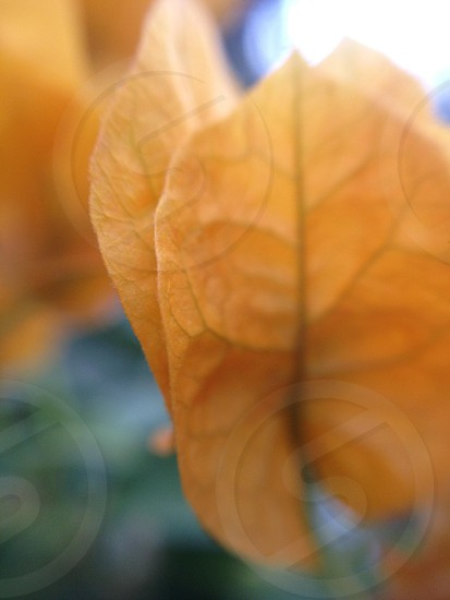 orange leaf plant photo