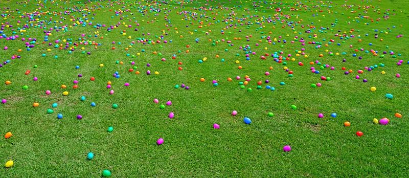 Easter egg basket celebration holiday tradition Easter egg hunt Easter egg hunt grass lawn photo