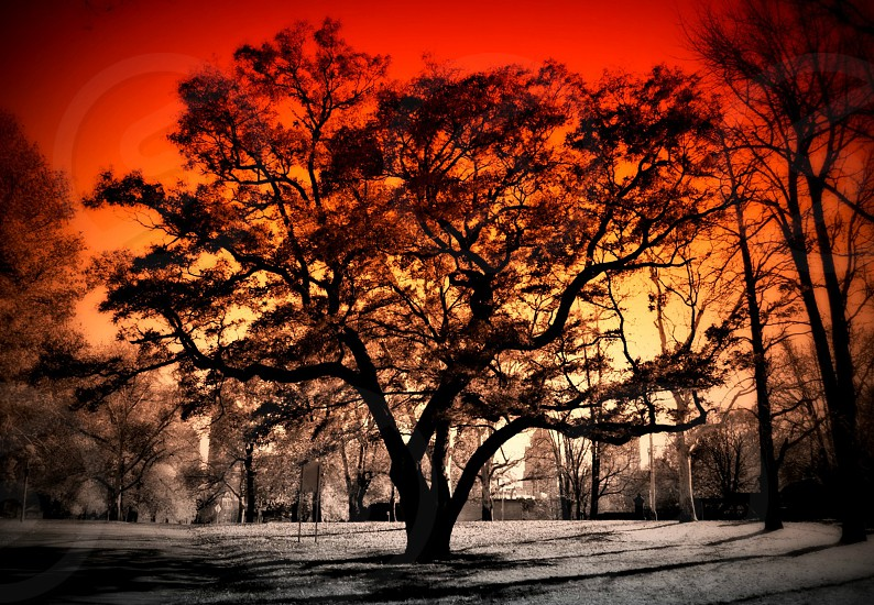 Tree on Fire photo