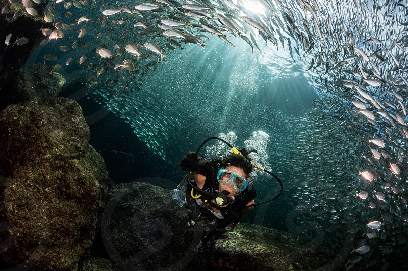 Black hair young and pretty mexican latina Scuba diver while going Inside a giant sardines school of fish bait ball in the reef and blue sea in Mexico photo