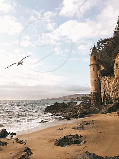 Castle beach bird ocean tower Pirates waves photo