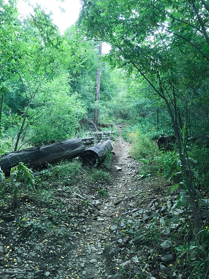 A peaceful and relaxing trail; Mount Lemon photo