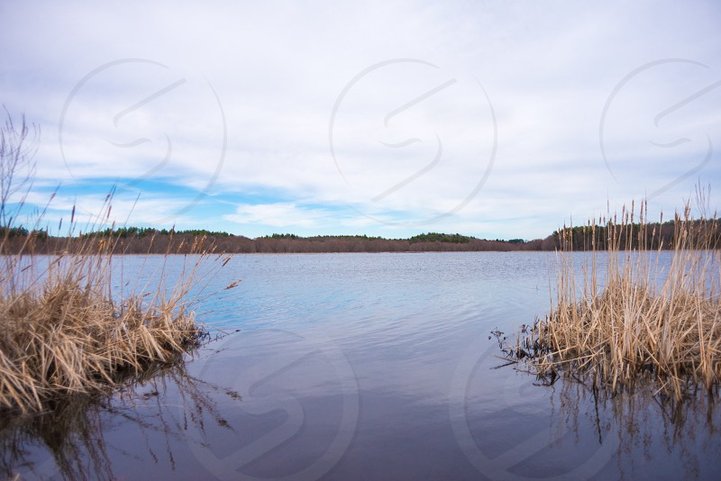 wheat grass on a body of water with mountains on the background during daytime photo