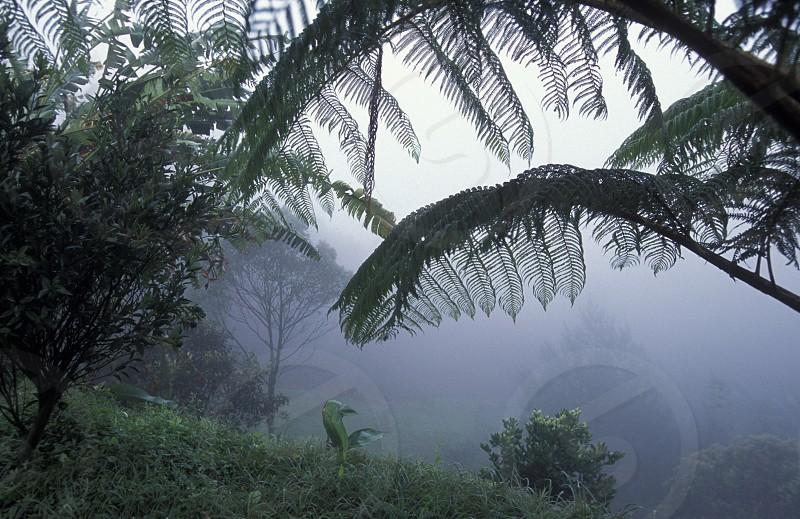 AMERICA LATIN AMERICA HONDURAS COPAN NATURE LANDSCAPE FOREST RAIN FOREST PLANT photo
