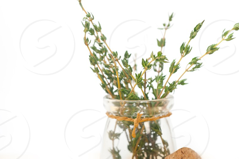 fresh thyme on a glass jar over a white wood rustic table photo