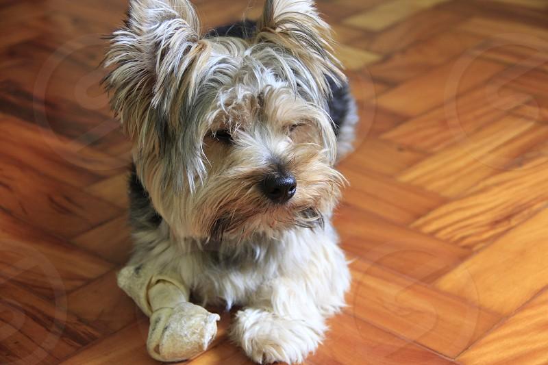 Thoughtful Dog photo