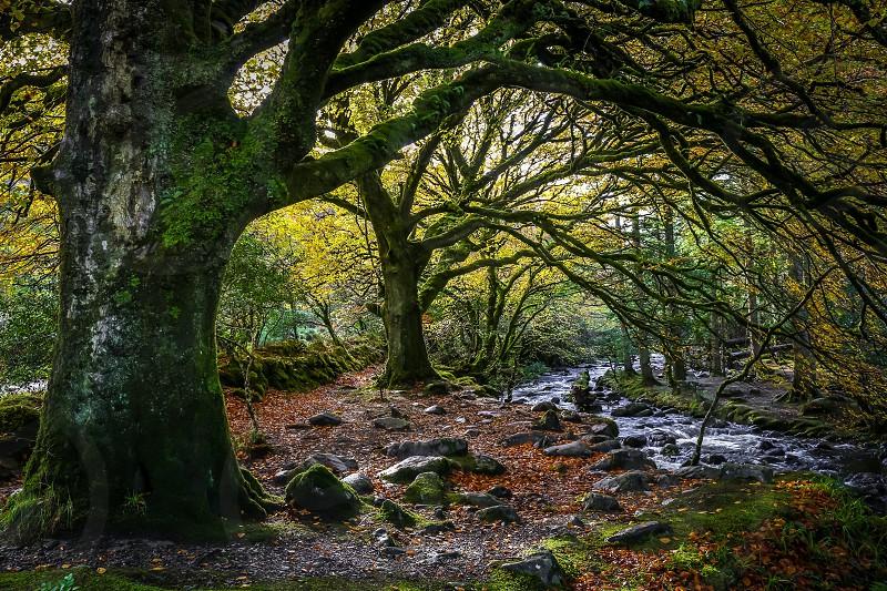 green oak tree near the river photo