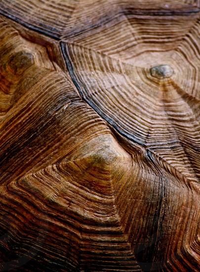 Tortoise shell close-up photo