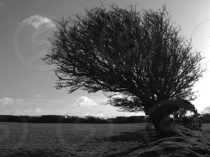Windswept  photo