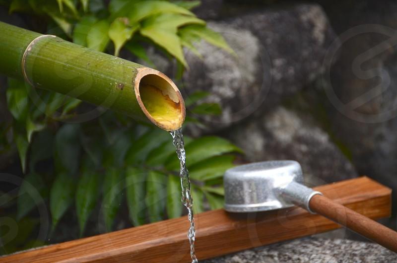 bamboo reed drainpipe photo