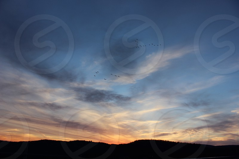 flock of birds flying on cloudy sky in panorama photography photo