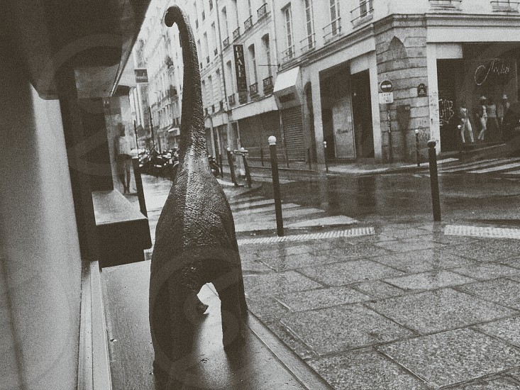 black and white photo of a dinosaur walking at an empty street photo