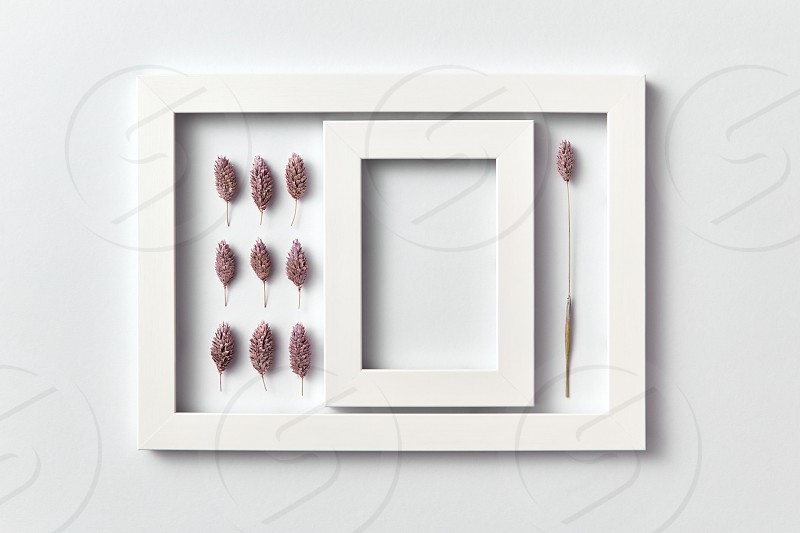 Creative pattern of dry painted cones and empty carcass in a rectangular frame on a light background place for text. Flat lay. Greeting card. photo