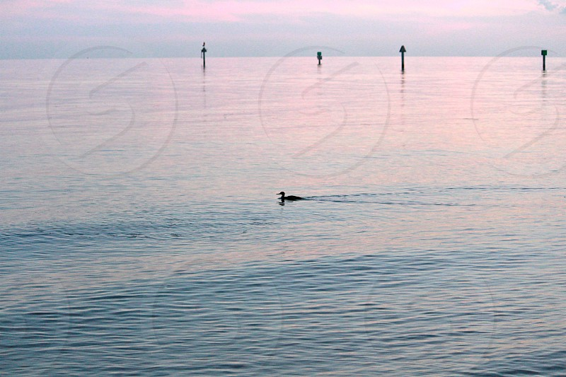 duck swimming on water during daytime photo