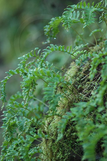 fern rain forest photo