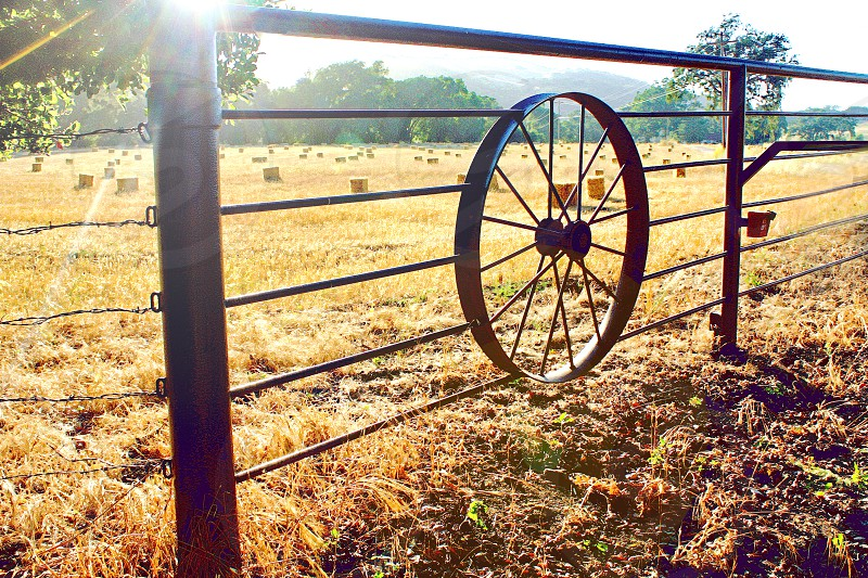 Morning over a golden farm field with a fence containing a wagon wheel photo