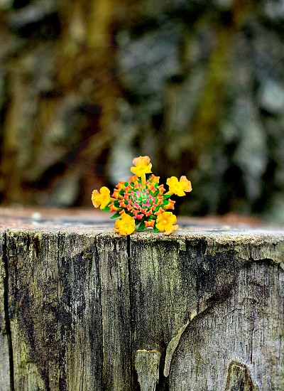 flower beautiful photo