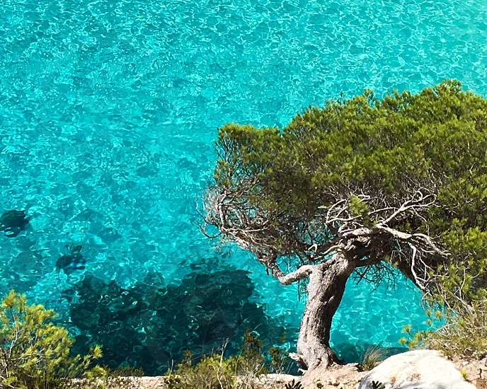 Sea tree water wall photo