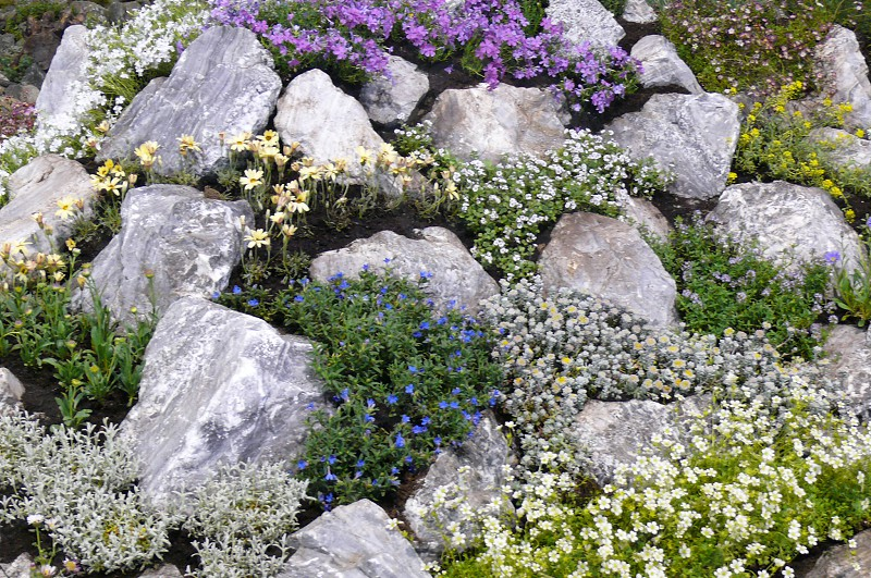 gray rocks with flowers photo