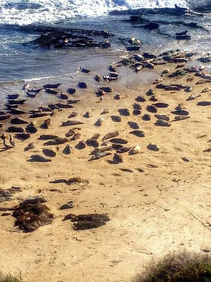 Seals soaking up the sun photo