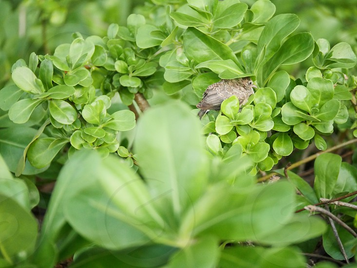 Bird in a green bush nature  photo