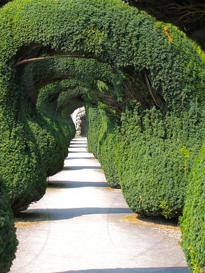 Topiary formed arches forming an ornate walkway for a path in an english victorian garden. photo