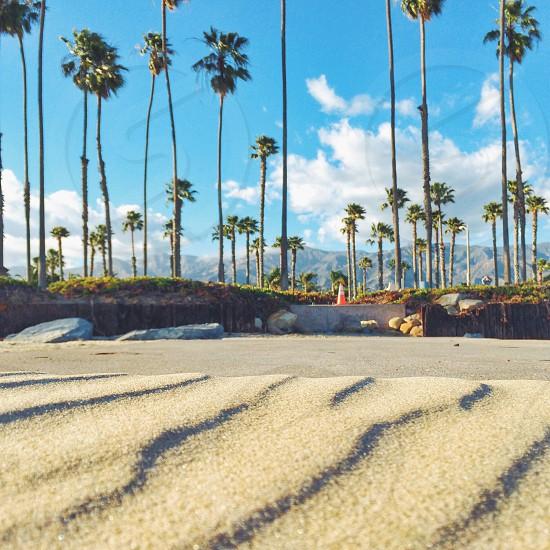 palm trees near beach photo