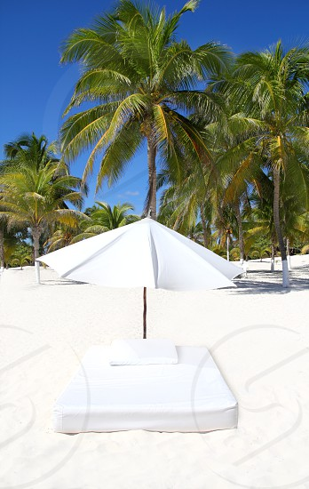parasol beach tropical umbrella mattress with palm trees photo