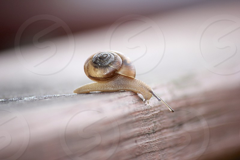 Snail on the move photo