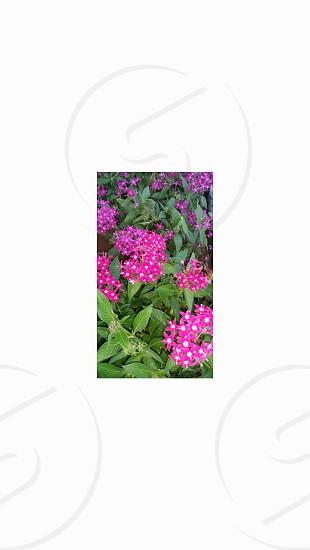 Flowers Blooming photo
