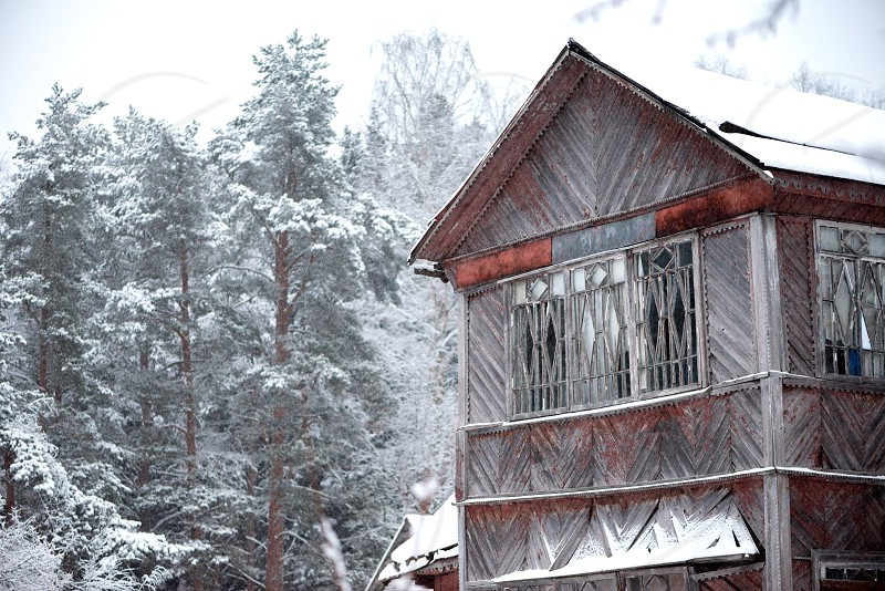 Old wooden house trees in snow forest winter nature photo