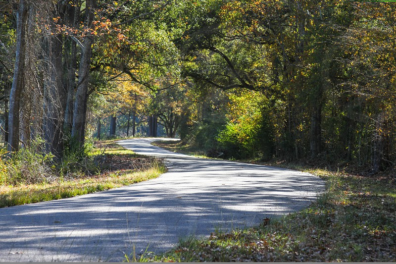 Autumn Country Road photo