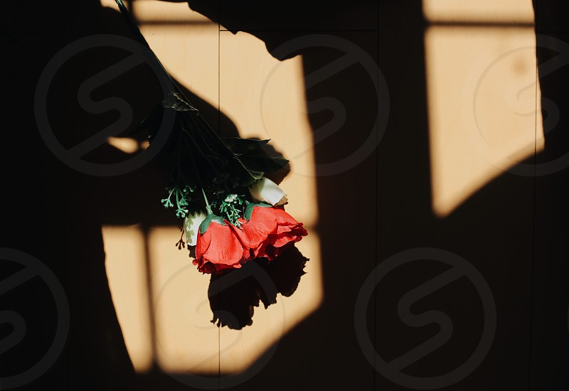 red roses on beige tile photo