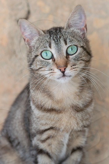 The eyes of my wonderful cat. photo