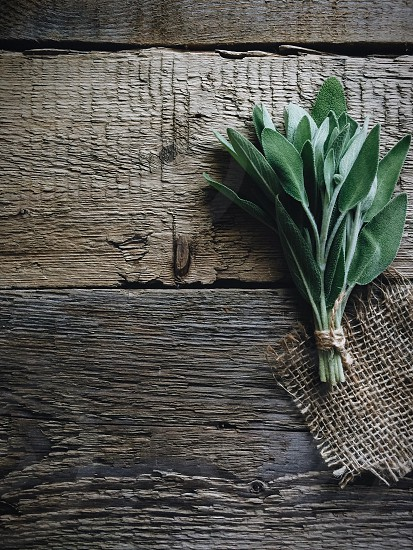 sage wooden rustic background photo