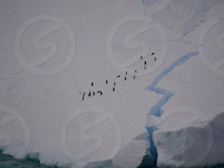 Penguins on iceberg in Antarctica photo